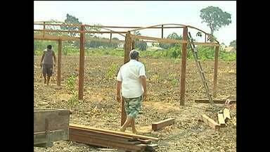Em Santarém, cooperativa investe na produção de mudas frutíferas e madeireiras - Bom Dia Rural destaca as alternativas encontradas pelos produtores para enfrentar o período de seca na região.