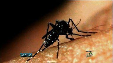 População precisa participar do combate ao mosquito da dengue - Veja como prevenir a proliferação do mosquito.