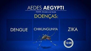Governo anuncia medidas para combater o Aedes Aegypti - Mosquito transmite dengue, chicungunya e zika