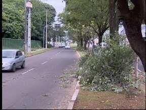Avenidas de Pres. Prudente são interditadas para poda de árvores - Concessionária que administra a energia elétrica realizou o trabalho.