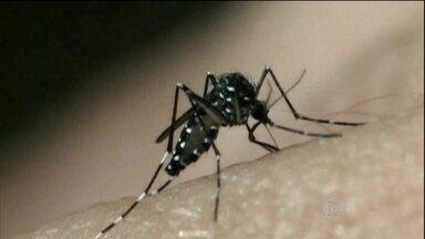 RJ2 estreia série sobre Aedes aegypti - Um único mosquito pode colocar até 1.000 ovos durante os 30 dias de vida. Ele também transmite três doenças diferentes e pode até matar. Combate aos criadouros é arma principal.