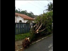 Especialistas alertam moradores para sinais que indicam que árvores podem cair com chuvas - Forte chuva com ventos fortes atingiu o Vale do Aço no último fim de semana.