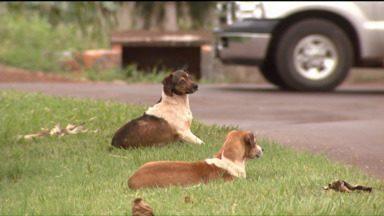 Em Toledo, autoridades reforçam programa de castração de animais para facilitar adoção - As autoridades registraram cerca de seis mil animais abandonados na cidade.
