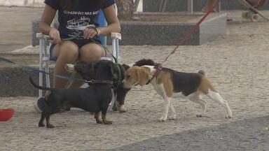 Grupo orienta pessoas sobre cuidados durante passeio com animais, em Manaus - Ação ocorreu neste domingo (20).