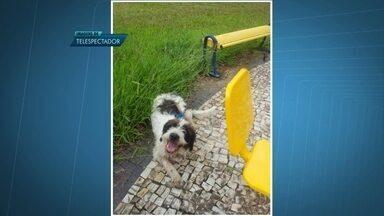 Câmera de segurança flagra cachorro sendo abandonado no Taquari - Uma pessoa desceu de um carro e levou o cachorro até uma praça. Logo depois, deixou o animal lá e foi embora.