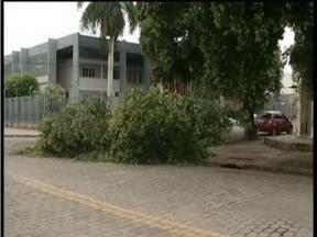 Árvore cai em rua do Bairro São Paulo em Governador Valadares - Árvore ocupa a metade da pista.