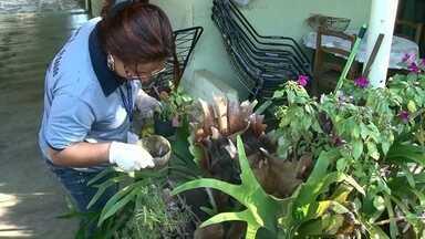 Agentes de endemias fazem 'arrastão' contra a dengue no Jardim Morumbi, em Paranavaí - A ação foi programada depois que um morador do bairro foi diagnosticado com dengue. Foi o primeiro caso confirmado da doença em Paranavaí este ano.
