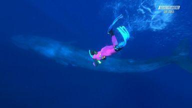 Sri Lanka E A Baleia Azul