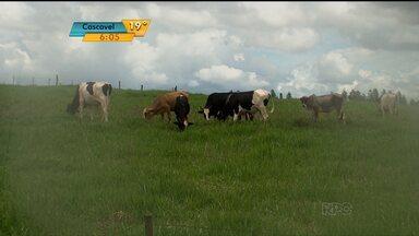 Ocorrências de furto de gado crescem 70% no estado - Produtor foi vítimas duas vezes em menos de duas semanas