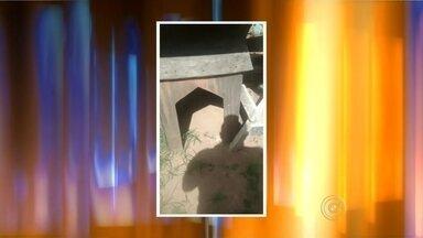Responsáveis por manter cães em terreno baldio são multados em Marília - Uma denúncia levou a PM Ambiental a multar em R$ 6 mil, os responsáveis por maus-tratos a cães em Marília (SP), na quinta-feira (21). Os animais eram mantidos em um terreno em péssimas condições.