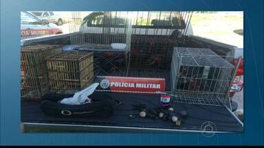 JPB2JP: Polícia Militar desarticula rinha de galo na Capital - No Bairro das Indústrias.