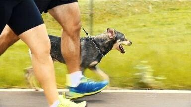 Cachorro motiva casal a correr e ter uma vida mais saudável - Ela conseguiu perder 19 quilos. Ele já perdeu 20. O casal conta ao Bem Estar as conquistas que tiveram na jornada de busca pela qualidade de vida. Um cachorrinho especial foi fundamental nesse estímulo.
