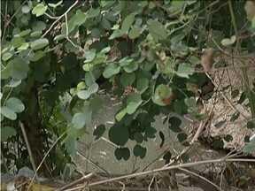 Moradores de Ipatinga esperam por capina de mato alto - Bairro Iguaçu já solicitou várias vezes manutenção da Prefeitura.