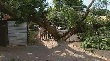Árvore cai e prejudica fornecimento de energia na zona sul de Ribeirão Preto - Acidente aconteceu na Avenida Itatiaia. Três carros e a fachada de uma casa noturna foram atingidos.