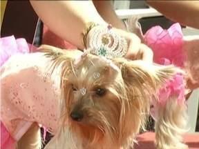 Vale do Aço tem Carnaval especial para animais de estimação - Dezenas de bichinhos apareceram no CarnaPet fantasiados.