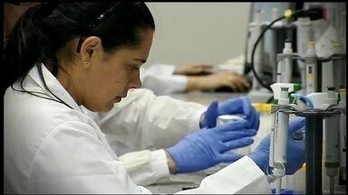 Pesquisadores da Unesp de Botucatu isolam bactérias do intestino do Aedes Aegypti - Pesquisadores da Unesp, em Botucatu, isolaram 28 tipos de bactérias do intestino do Aedes Aegypti. Eles querem descobrir se uma dessas bactérias pode neutralizar os vírus da dengue e do zika.