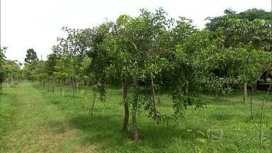 Homem planta sozinho 18 mil árvores e cria primeiro parque linear de SP - Quatro anos depois do início do trabalho, prefeitura criou o Parque Tiquatira, com 3 quilômetros de extensão e mais de 150 espécies de árvores.