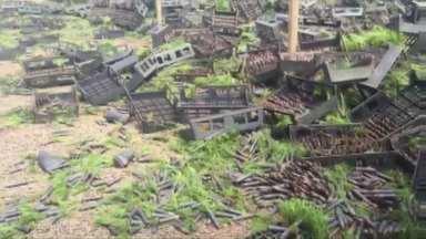 Em ação do MST, mulheres destróem mudas da Araupel - Milhares de mudas foram destruídas na fazenda da Araupel em Quedas do Iguaçu.