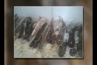 Adepará apreende carga ilegal de peixe e jacaré em porto de Belém - Produtos seriam comercializados em feiras livres da capital paraense. Carga era transportada em caixas de isopor sujas e sem resfriamento nesta terça-feira (8).