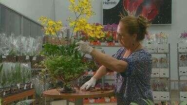 Conheça o trabalho de mulheres na produção de flores em Holambra - Um dos principais presentes dados nesta data especial são as flores. Essas mulheres fazem parte de toda a cadeia de produção desse agrado.