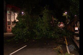 Galho de árvore cai e atinge fiação elétrica no bairro de Nazaré, em Belém - Caso foi na noite da última quinta-feira, 17.