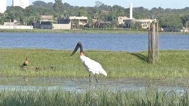 Lagoa Maior em Três Lagoas chama atenção pela quantidade de animais - Local pode ser transformado em uma Área de Preservação Permanente.