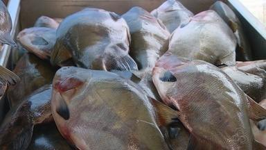 Confira os preços dos peixes para a semana santa, em Manaus - AM TV visitou o feirão da Sepror.