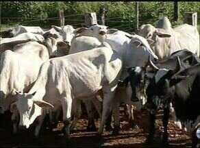 Momento do Agronegócio: Adapec quer proibir uso de medicamento em bovinos - Momento do Agronegócio: Adapec quer proibir uso de medicamento em bovinos