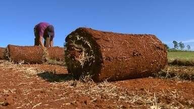 Maior polo de produção de grama do Brasil fica na região de Itapetininga - Poucos lugares do Brasil têm tanta grama como a região de Itapetininga. E o Nosso Campo descobriu que a maior parte está na zona rural.