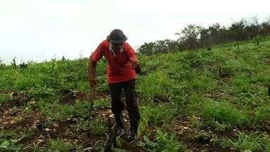 Agricultores da região dos Inhamuns perdem até 70% da safra - Chuvas irregulares prejudicaram o plantio.