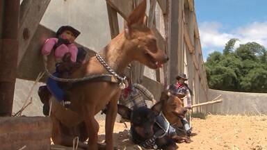 Conheça cadelinhas de rodeio que estão se destacando na região sudoeste - Os animais, da raça pinscher, têm até agenda de apresentações.