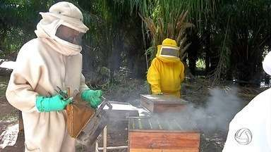 Ribeirinhos aprendem técnicas de criação de abelhas no Pantanal de MS - Além de aumentar a renda familiar, a atividade contribui para a conservação do meio ambiente.