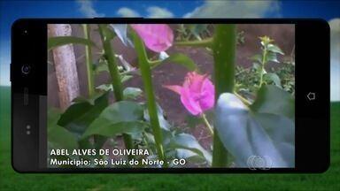 Confira imagens enviadas por telespectadores do Jornal do Campo - Fotos de flores que nascem dos espinhos impressionaram donos da planta.