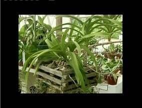 Escolha dos vasos pode fazer a diferença na saúde das plantas - Tamanho e material dos vasos devem ser observados.