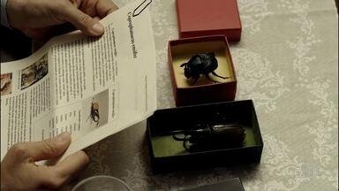 'O escaravelho do diabo' leva para o cinema um dos clássicos da literatura infantil - O filme é uma adaptação do livro de mesmo nome escrito por Lucia Machado de Almeida na década de 70. A obra fez sucesso entre os adolescentes.