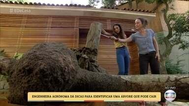 Especialista mostra como identificar árvore que pode cair - Engenheira agrônoma dá dicas de árvores ideais para plantar em casa
