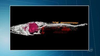 Pesquisadores acham fóssil inédito de peixe com coração preservado em 3D - Peixe tem mais de 100 milhões de anos.