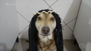 Cachorro usa fantasias de personagens e pessoas famosas - Ninão tem mais de 300 mil seguidores na internet