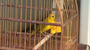 Pássaros e drogas são apreendidos no bairro Ouro Preto, na Região da Pampulha, em BH - Nove pássaros da fauna silvestre, uma arma, pinos de cocaína, maconha e crack foram apreendidos no local. Um homem foi preso. A dona da casa foi autuada por manter pássaros em cativeiro.