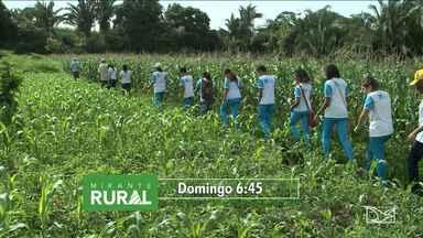 Veja os destaques do Mirante Rural deste domingo (1º) - Veja os destaques do Mirante Rural deste domingo (1º).