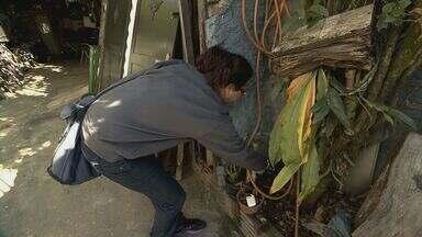 Agentes realizam novo trabalho para procurar larvas do Aedes aegypti em Rio Claro - Dos sete casos confirmados de Chikungunya quatro são importados.