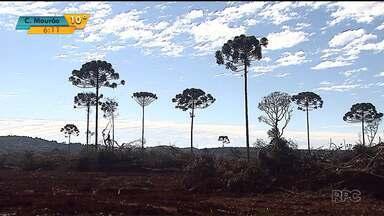 Crescem as áreas desmatadas na região central do estado - Em 15 cidades, as áreas desmatadas mais do que dobraram do ano retrasado para o passado