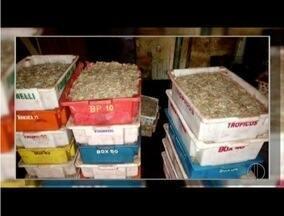 Mais de 500 Kg de camarão são apreendidos em Farol de São Tomé, em Campos, RJ - Estabelecimentos comerciais foram fiscalizados.