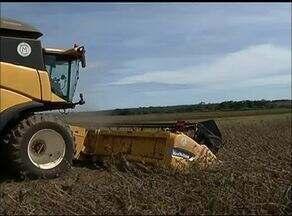 Fim da colheita da soja é um dos destaques do quadro Momento do Agronegócio - Fim da colheita da soja é um dos destaques do quadro Momento do Agronegócio