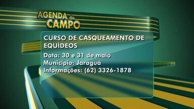 Veja a agenda do campo para esta semana em Goiás - Jaraguá sedia curso de casqueamento de equídeos.