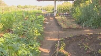 Agricultores participam de curso sobre agroecologia, em Ji-Paraná - Técnica usadas no Sul do Brasil foram repassadas aos trabalhadores.