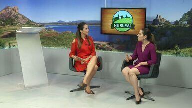 Fortaleza tem programação especial no Dia do Meio Ambiente - Fortaleza tem programação especial no Dia do Meio Ambiente