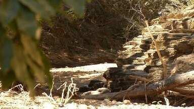 Seca põe produtores do Norte de Minas em estado de alerta - Cerca de 90% dos rios desapareceram.