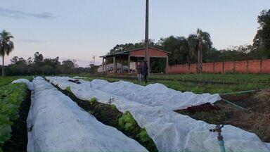 Geada provoca perdas em hortas da região de Foz - Prejuízo só não foi maior porque alguns produtores protegeram a propriedade.