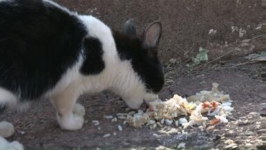 Polícia investiga morte de animais de estimação em Umuarama - Vários animais foram mortos em alguns bairros da cidade nas últimas semanas. A suspeita da polícia é de que os animais tenham sido envenenados.